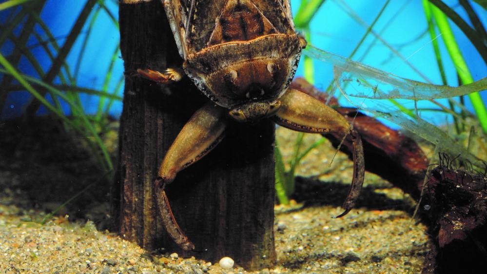 井の頭自然文化園の動物たちと飼育員|その3「タガメと渡辺良平さん」
