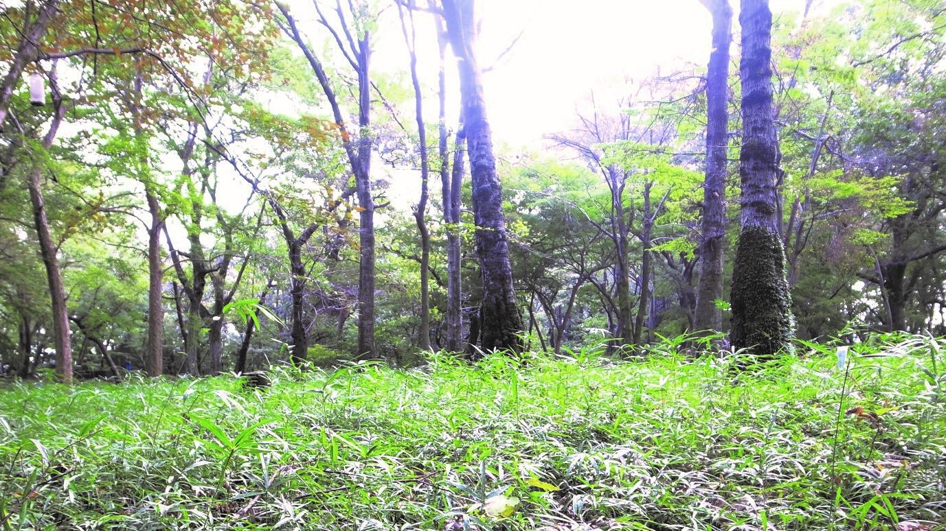 私と 井の頭公園 |その1「二度助けてくれた井の頭公園」 川井信良