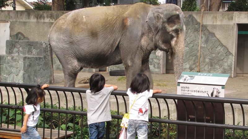 【今月のはな子 第1回】 今年64歳 日本最高齢です 元気に過ごしています