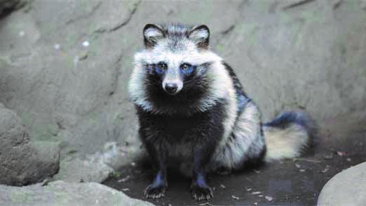 井の頭自然文化園の動物たちと飼育員|その10「タヌキと大西一馬さん」