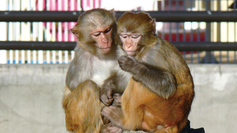 井の頭自然文化園の動物たちと飼育員|その9「アカゲザルと久保田夕紀子さん」