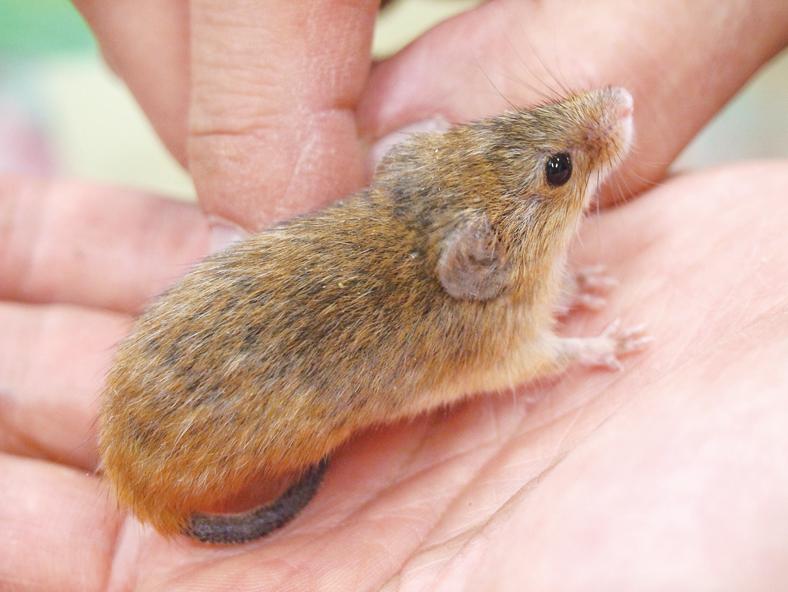 【井の頭自然文化園の動物たちと飼育員 第12回】 ネズミと浅見準一さん