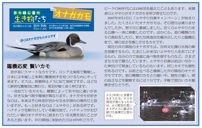 【井の頭公園の生き物たち 第2回】オナガガモ(臨機応変 賢いカモ)